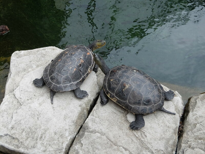 Гонконг - Oкеанический парк - Черепахи