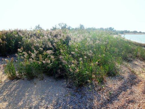 На севере Ясенской косы ... 34. Фото из велокольца. Ахтари-Староминская-Бейсугский пролив (204).JPG