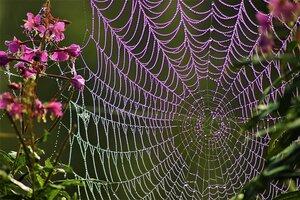 Паутинка в утренней росе
