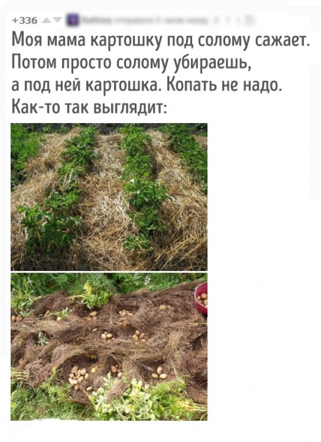 © pikabu.ru      18. Программа снижения веса, которая действительно работает