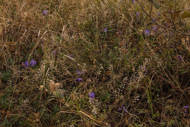 Осенние крокусы на склонах Агармыша