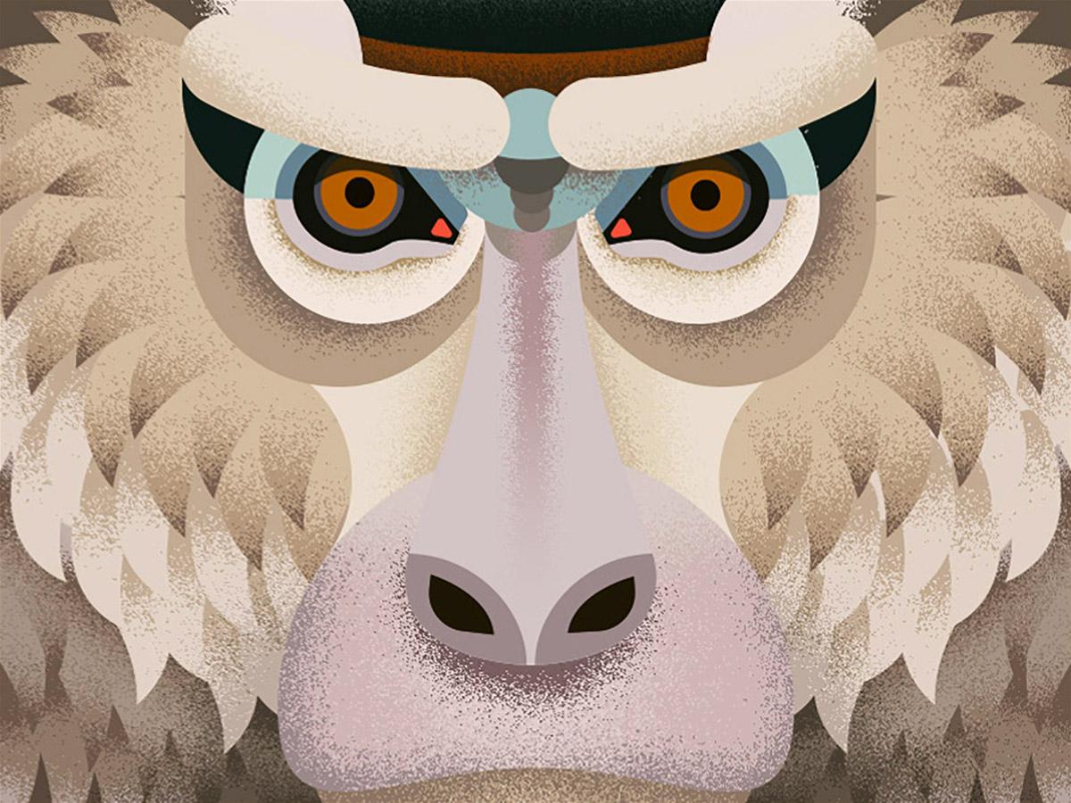 Old World Monkeys: Illustrations by Anano Miminoshvili