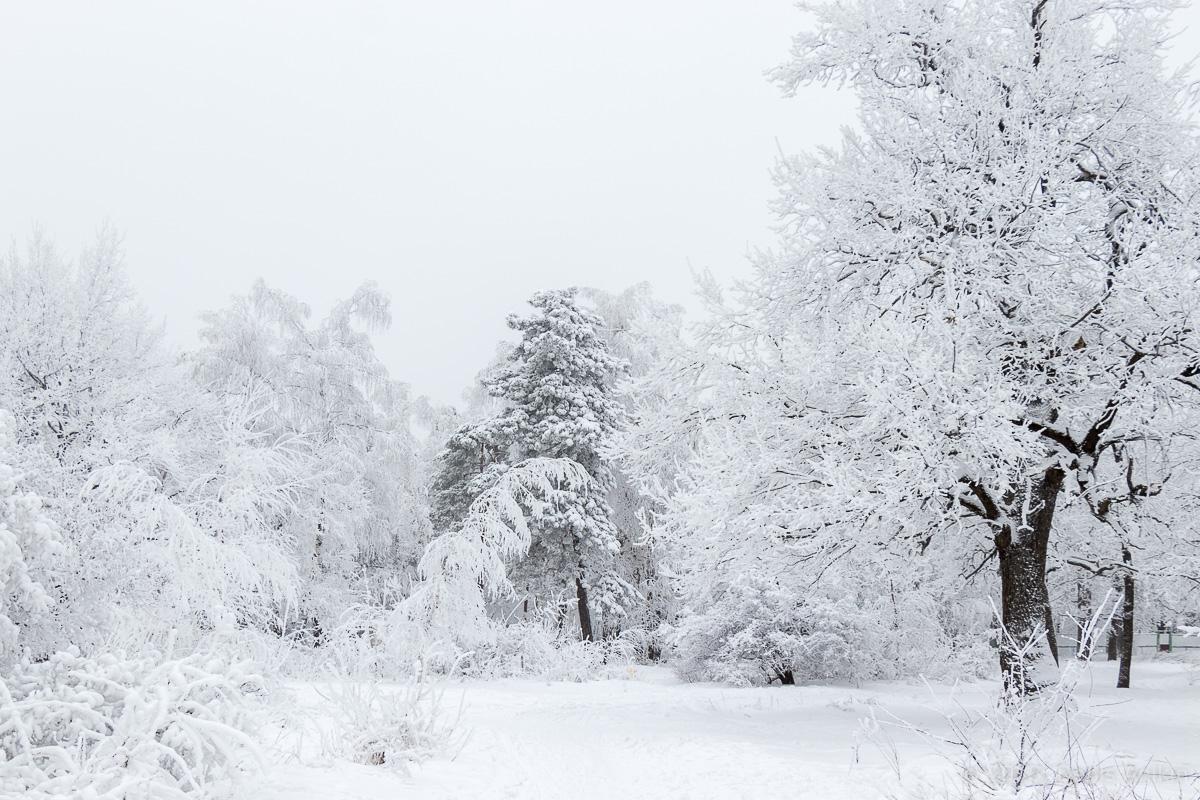 зима лес кумысная поляна фото 4
