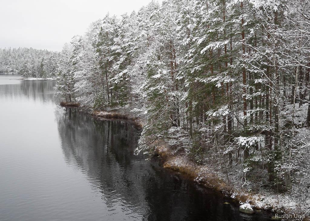 Реповеси зимой