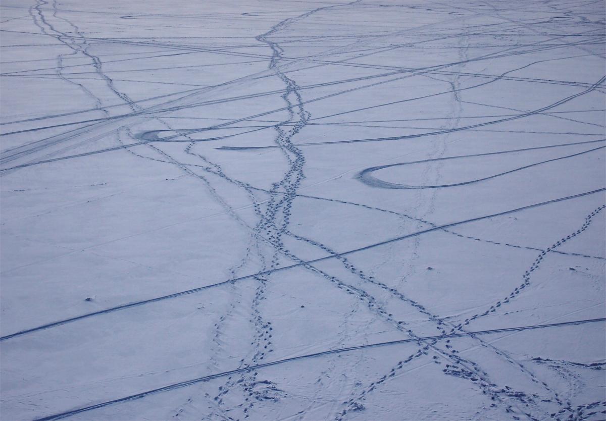 фото, следы на снегу, сверху