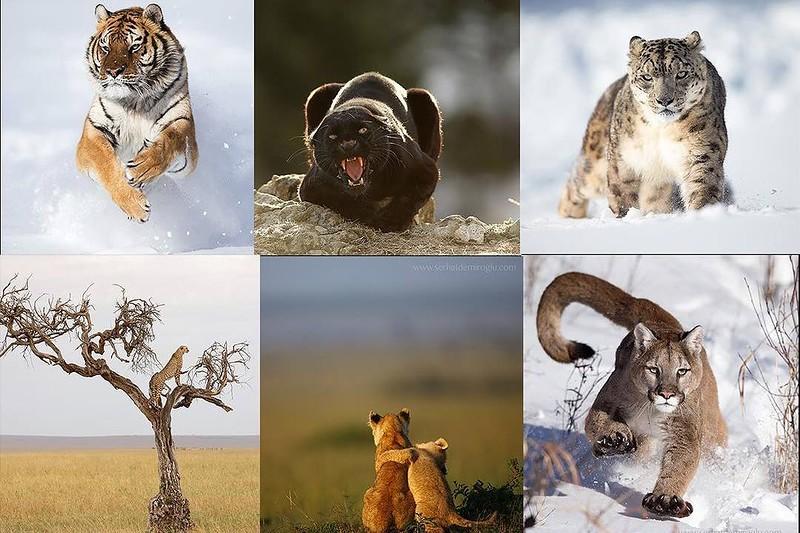 0 18028f 2956b306 orig - Портреты диких животных
