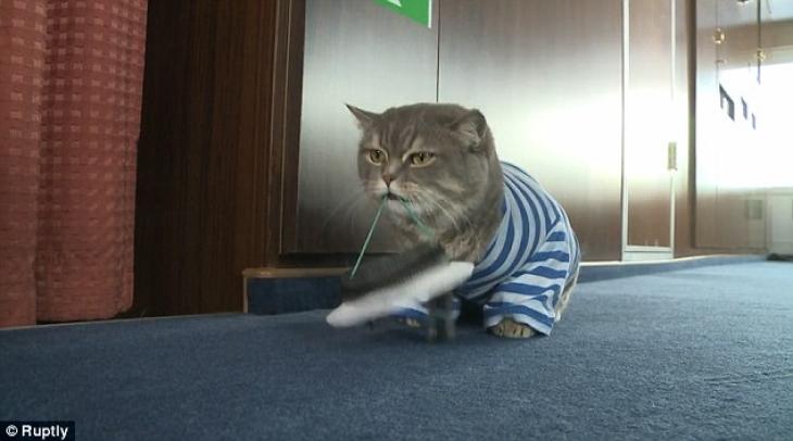 Коты ведь любят играть, так почему бы не поиграться с фуражкой?