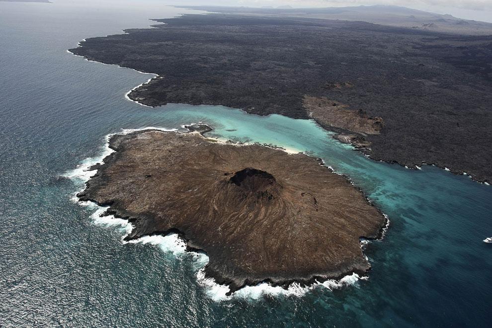 Черепахи-гиганты Галапагосских островов могут весить до 250 кг и жить больше 100 лет. Эта пересекает