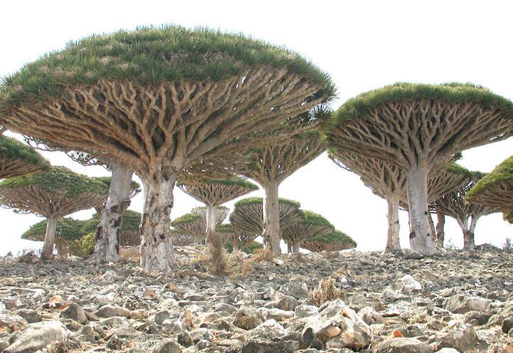 Остров Сокотра: самое «инопланетное» место на Земле (14 фото)