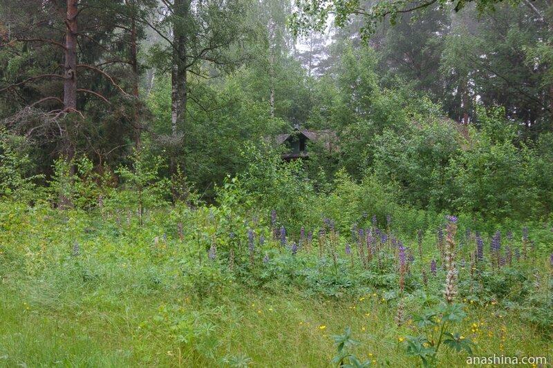 Заброшенный домик в лесу