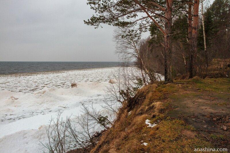Берег Онежского озера, Вологодская область