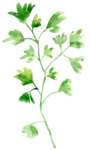 parsley1.png