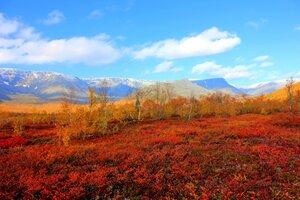 Хибинская тундра в ярких нарядах осени...