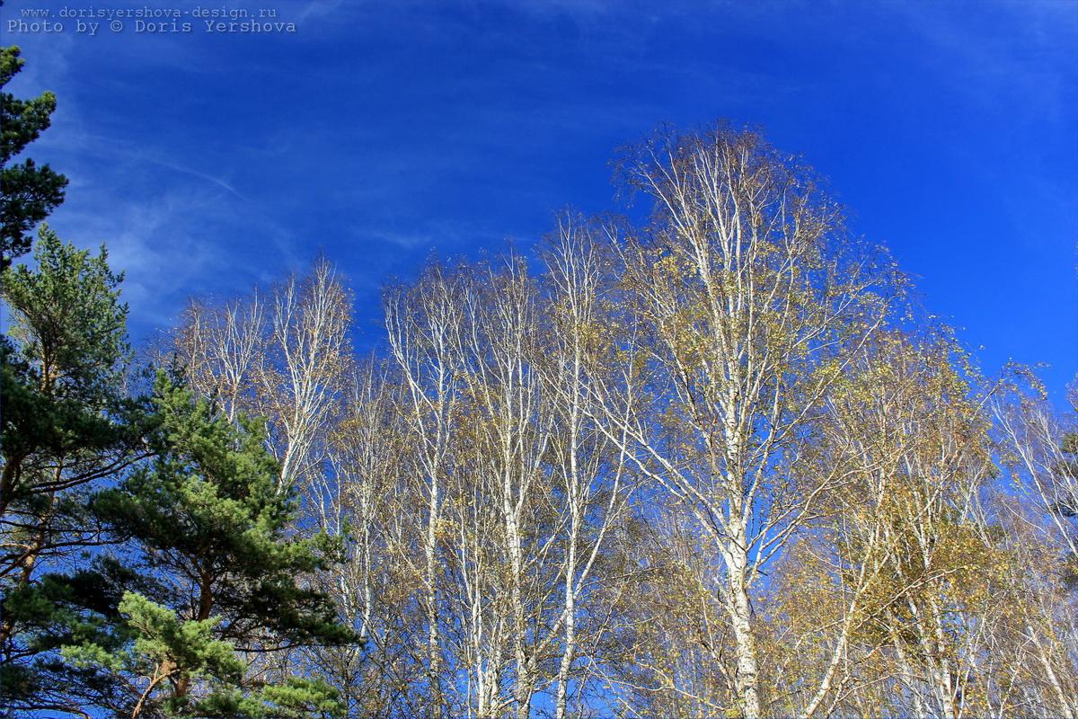 Осеннее небо. Фото - Дорис Ершова