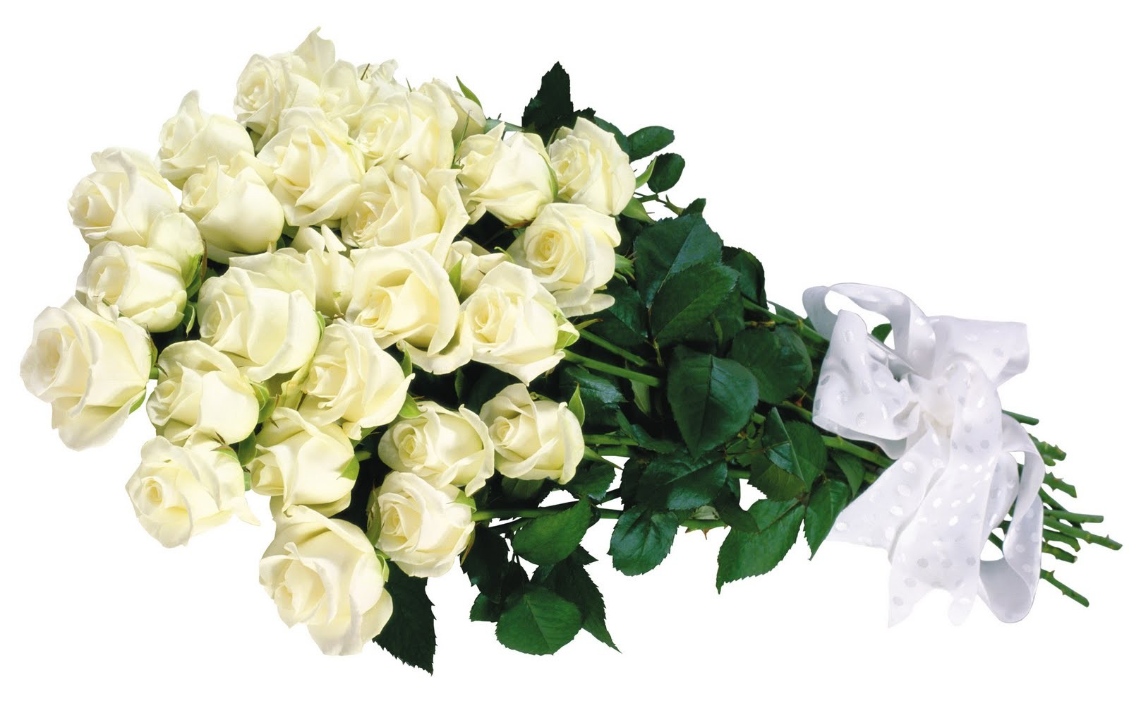 Friend Bouquet Roses Helen Flowers White Caramelie Gift Sweet Download Flower Desktop