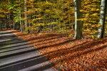 Осень письма разбросала листьями к ногам