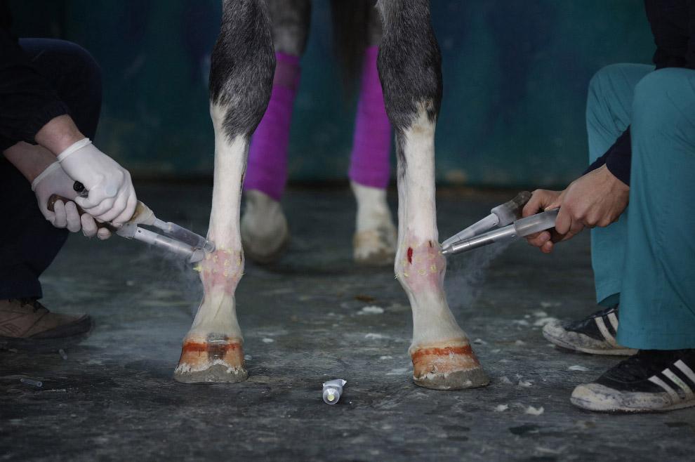 5. Лошадь с хозяином готовится к операции, скоро ей сделают анестезию, 4 марта 2015. (Фото Mura