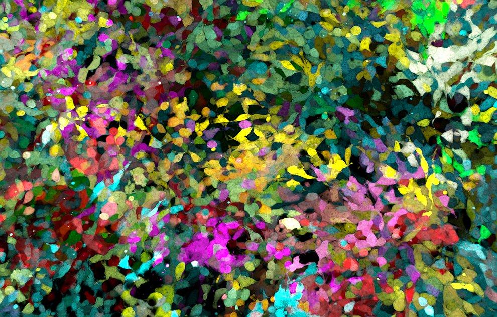1 МЕСТО.  Коловратка  — тип многоклеточных животных , ранее относимых к группе