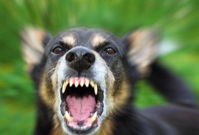 Вот каким образом собаки распознают плохих людей, это все объясняет… (8 фото)