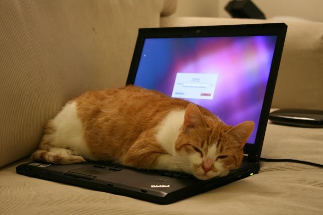 12действий, которыми мынезаметно портим свой ноутбук (12 фото)