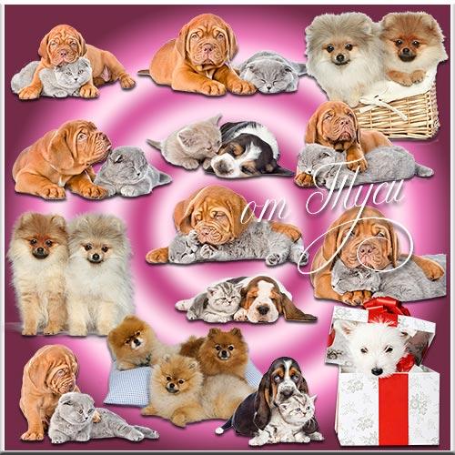 Четвероногие любимцы - Собаки и коты - Клипарт