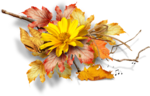 Autumn Gold #10 (163).png