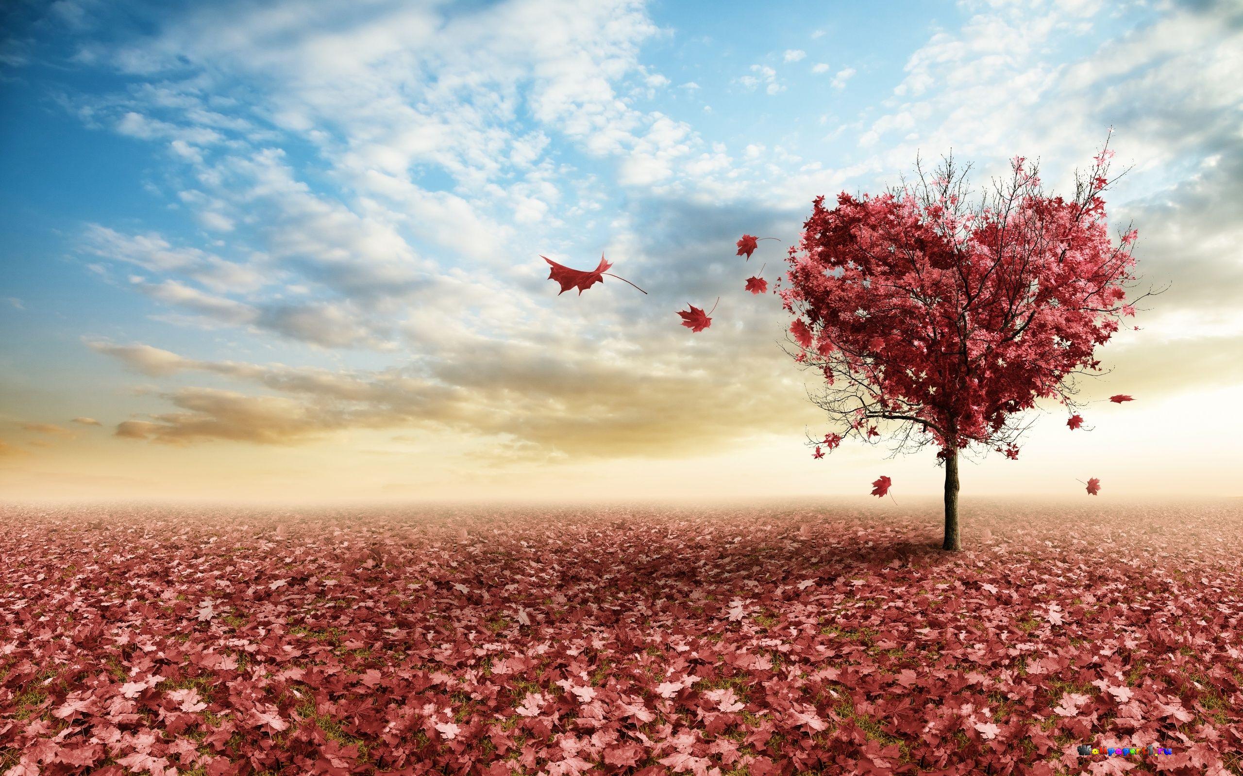 Любовь картинки (455 фото) скачать обои | 1600x2560