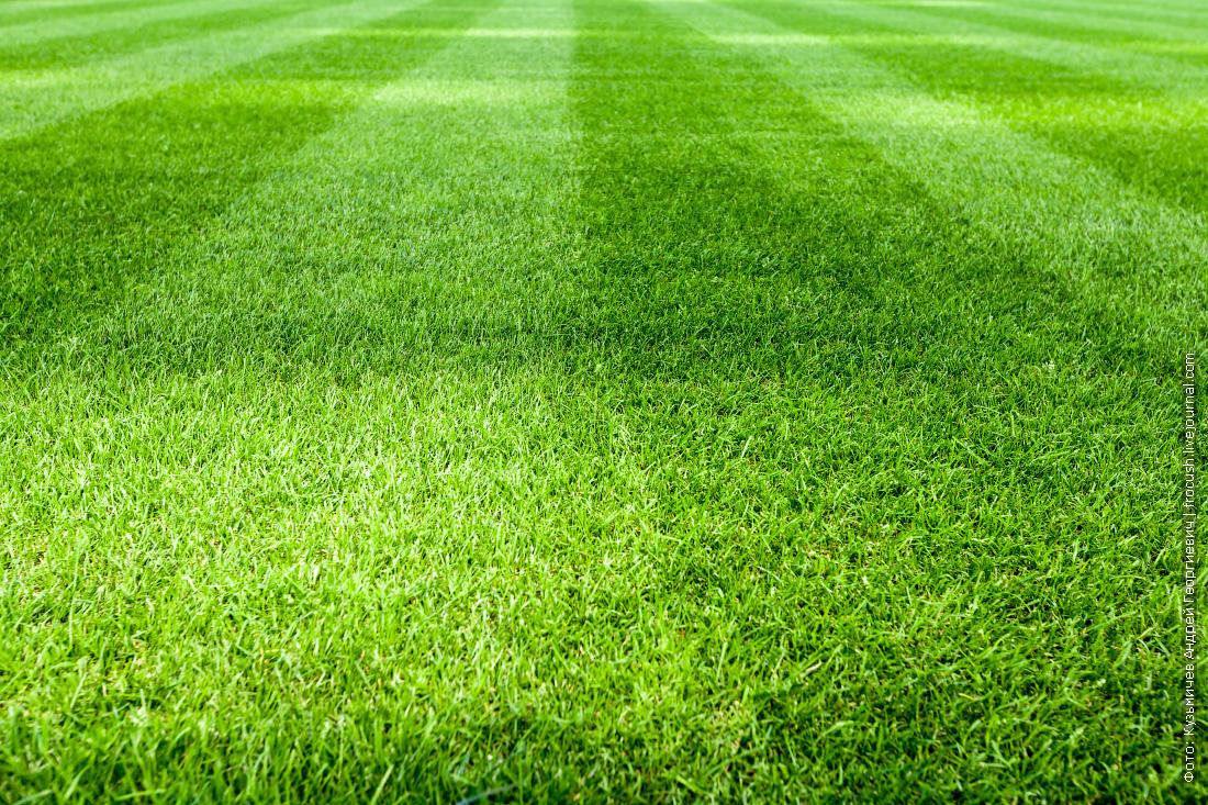 стадион фишт футбольное поле фото