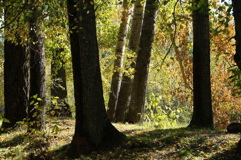Загрустили в парке, присмирели, бросив тень на землю, тополя...
