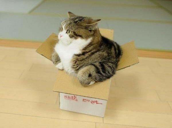 0 17f01a f9b41930 XL - Домик для котика
