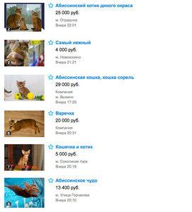 Цены на абиссинскую кошку в Москве