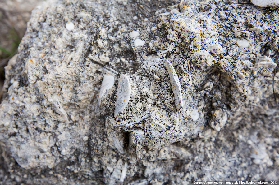 Моллюск, застывший в камне.