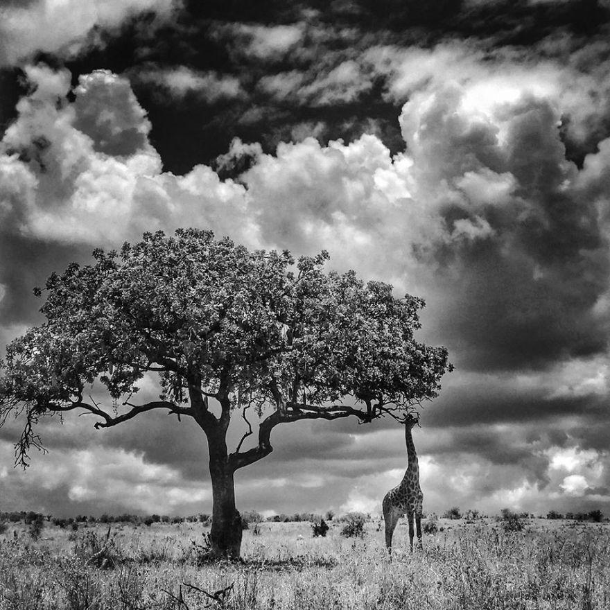 Победители фотоконкурса iPhone Photography Awards 2017