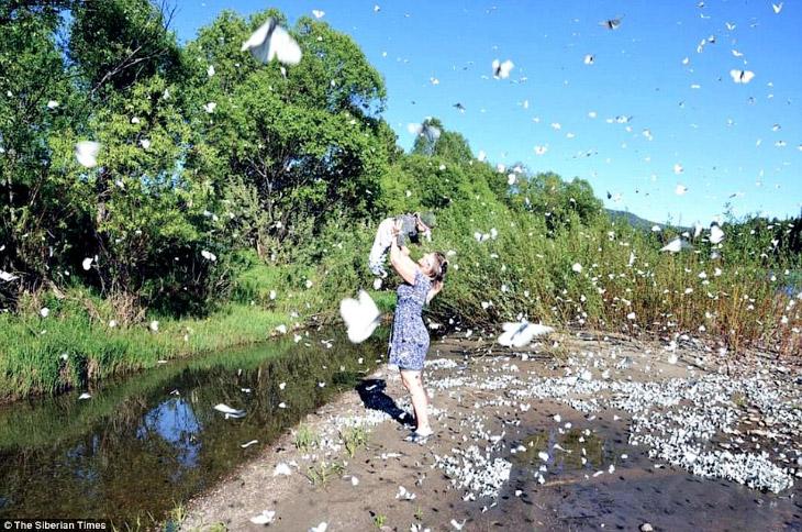 Эффект бабочки по-сибирски (9 фото)