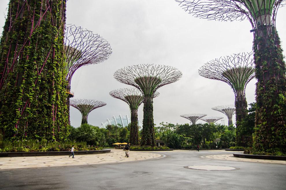 Деревья и оранжереи объединены в сложную единую экосистему: