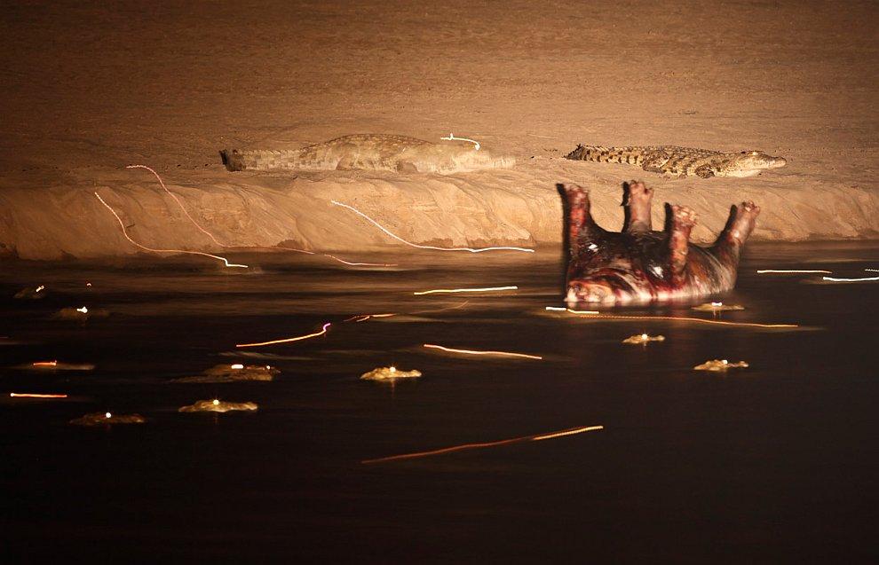 37. Беличьи игры, Сан-Хосе, штат Калифорния. (Фото © Chih-Hung Kao/National Geographic Photo