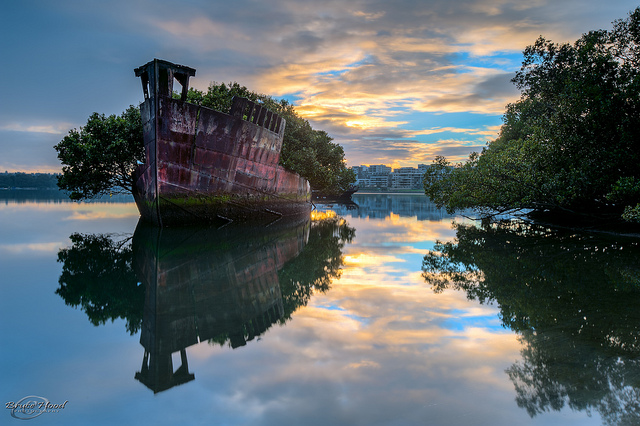 A 102-Year-Old Transport Ship Sprouts a Floating Forest (5 pics)