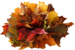 Autumn Gold #10 (29).png