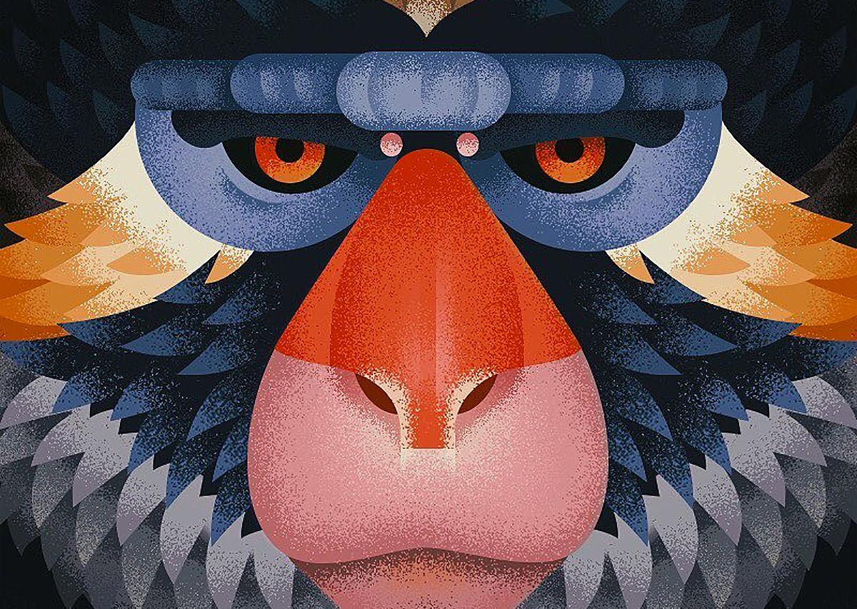Old World Monkeys: Illustrations by Anano Miminoshvili (8 pics)