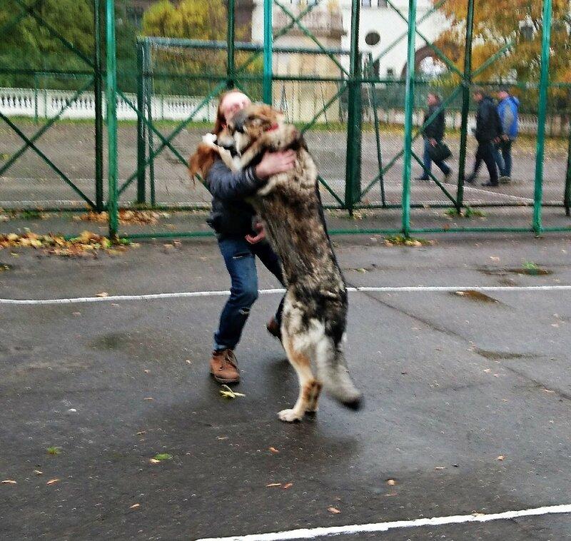 Антон Лапа Канис 13 октября 2017 6.jpg