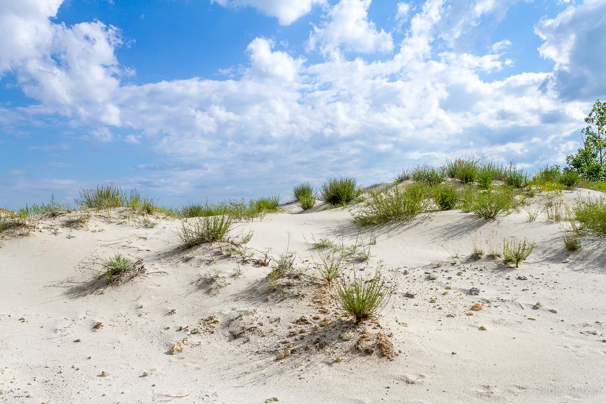 камышинский песчаный карьер фото 10