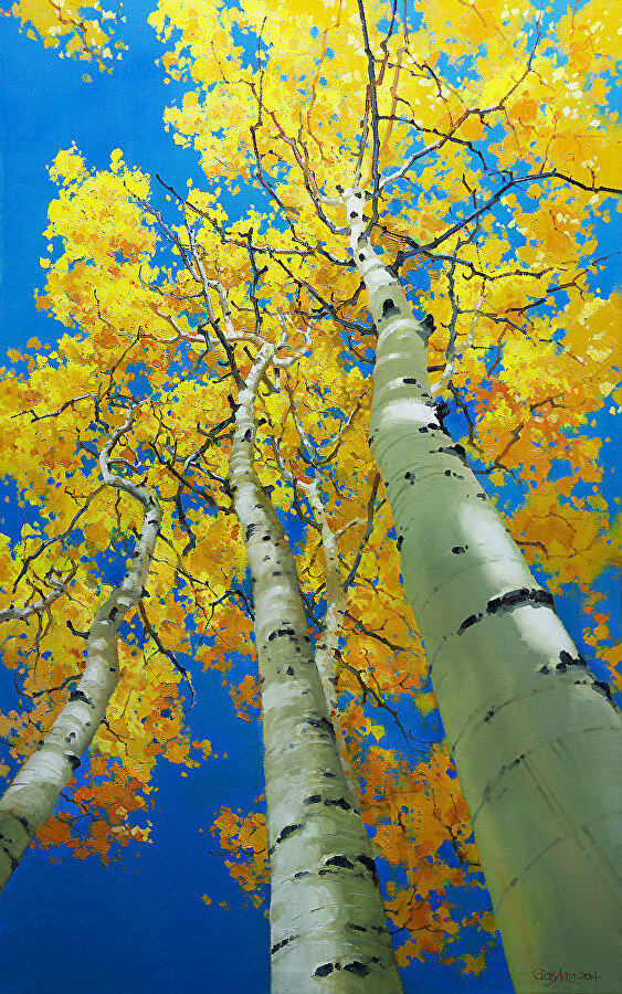 Gary Kim. Blue Sky and Tall Aspen Trees