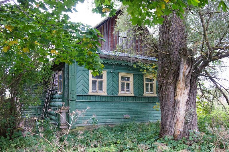 дом с большое дерево в деревне Ушницы, Ленинградская область