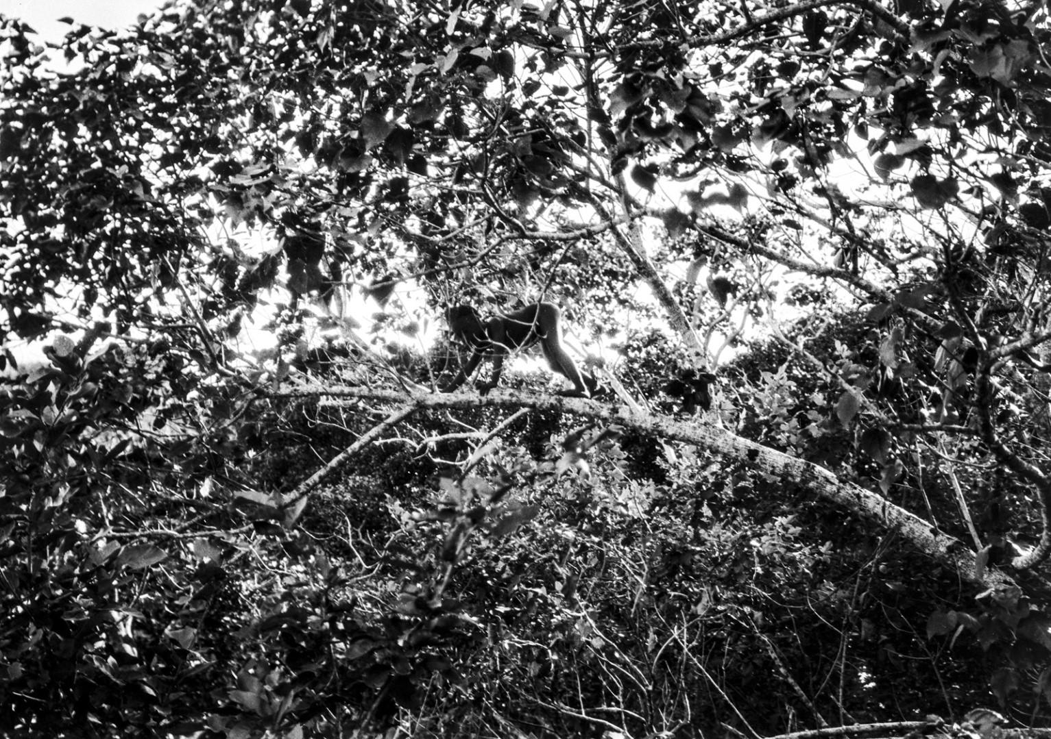 1214. Народность Джарава. Мальчик лезет по ветке