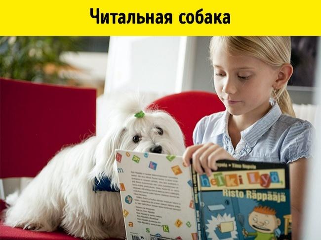 © eastnews  Вфинских библиотеках работают специально обученные «читальные» собаки, которые пр