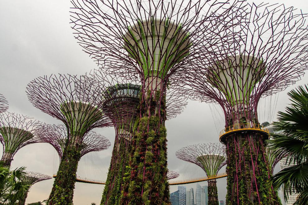 С 55 метровый высоты открывается замечательный вид на колесо обозрения Singapore Flyer и трибу