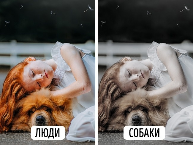 © pixabay     Собаки неотличают  красный цвет отзеленого , а