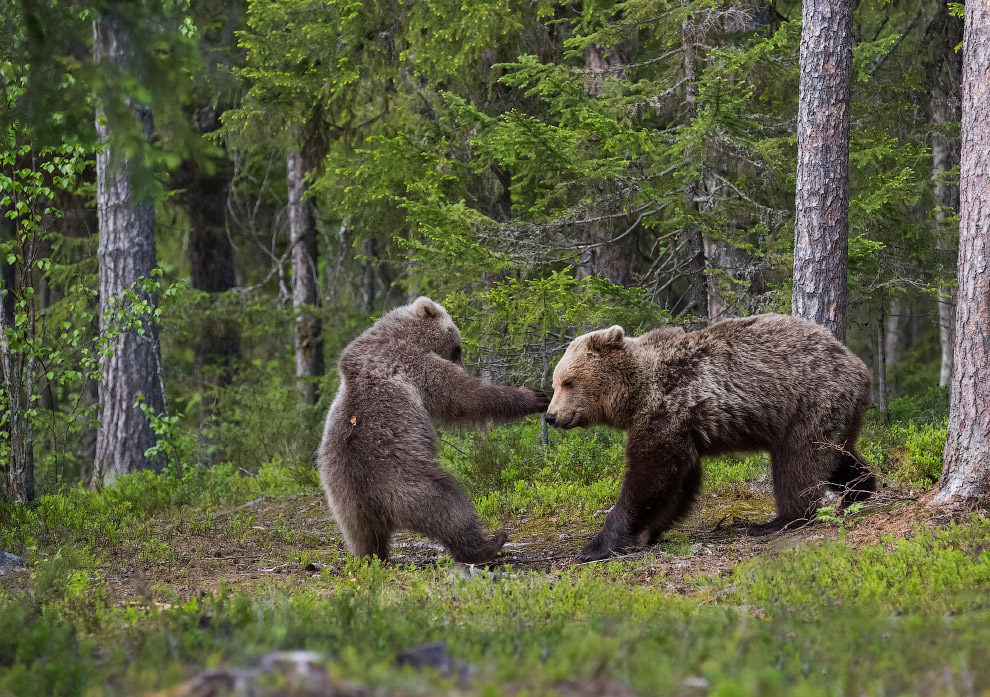 12. Улыбнитесь, вас снимают. (Фото Eugene Kitsios | Comedy Wildlife Photography Awards):