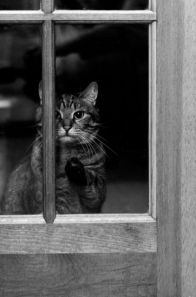 дома Дом-2 коты подборка чувства день работа самые