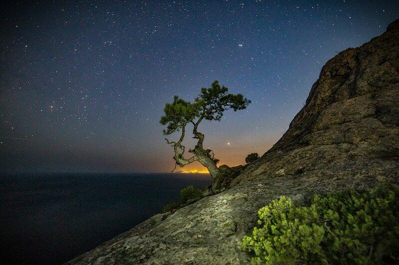 Ночь над деревом Банзай